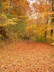 Bosque en otoño. Foto: Archenzo (licencia CC)