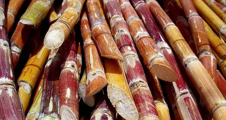 Homeopatía en cultivos agrícolas